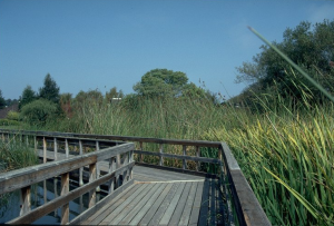 neary-lagoon-boardwalk-ne-before