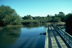 neary-lagoon-boardwalk-se-after
