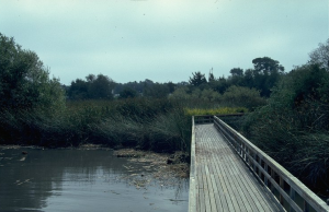 neary-lagoon-boardwalk-se-view