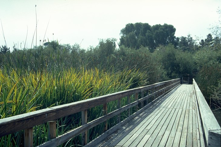 Neary Lagoon Tule Removal Project – Santa Cruz, CA